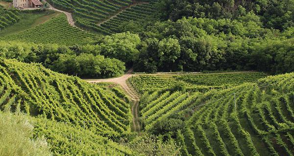 pps-vineyard